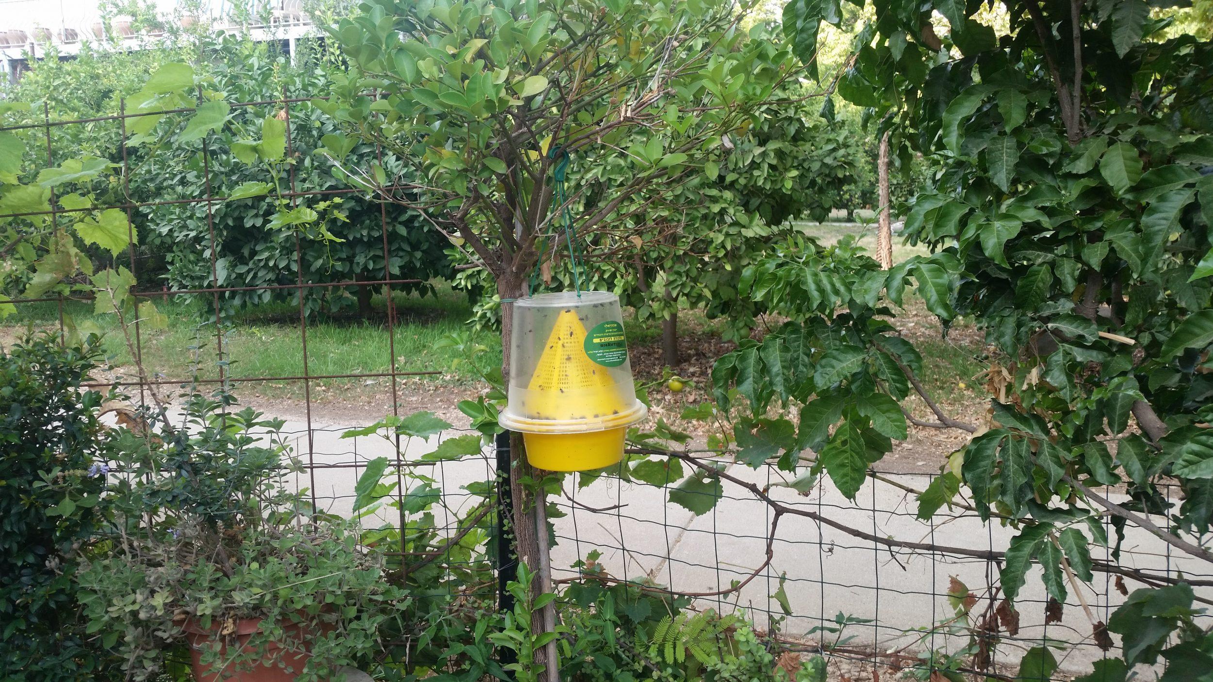 מלכודת זבובים לחצר
