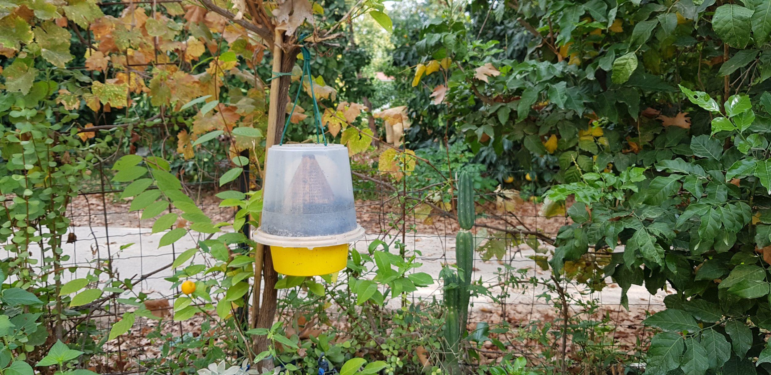 זבובים בחצר